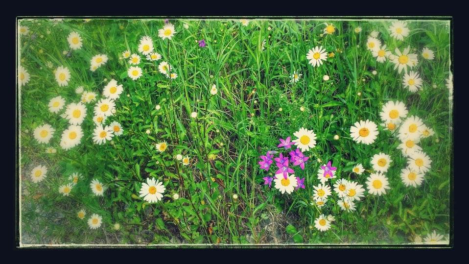 Kukkia kotipihalla